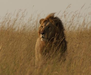 Africa House Safaris