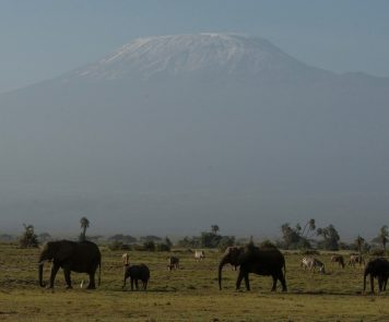 Africa House Safaris Kenya