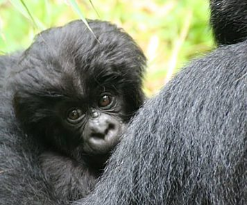 Africa House Safaris Uganda and Rwanda